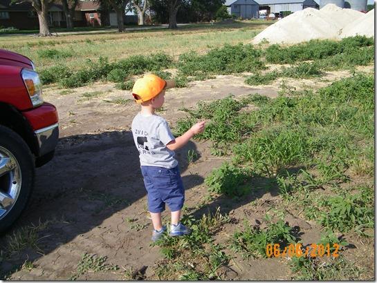 Harvest 2012 11