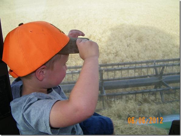 Harvest 2012 15