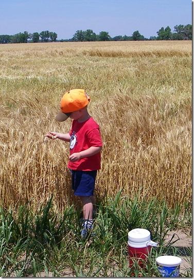 Harvest 2012 1