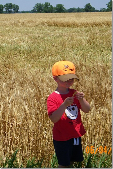 Harvest 2012 2